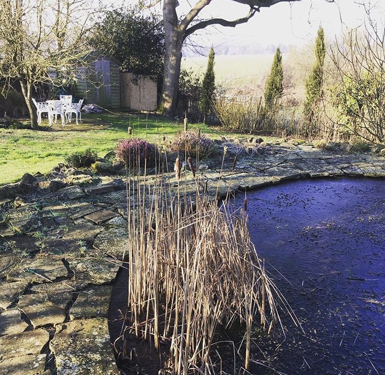Weeded Pond area